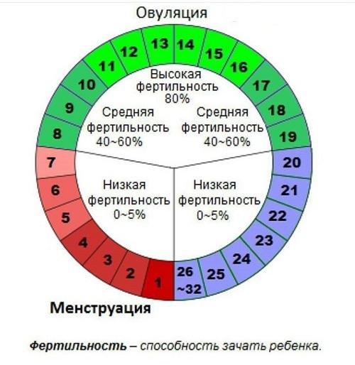 Уровень фертильности женщины в зависимости от дней цикла