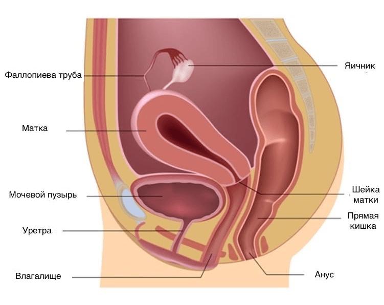Анальный секс матка