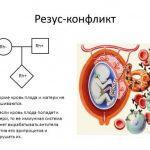 Антитела в крови матери атакуют ребёнка