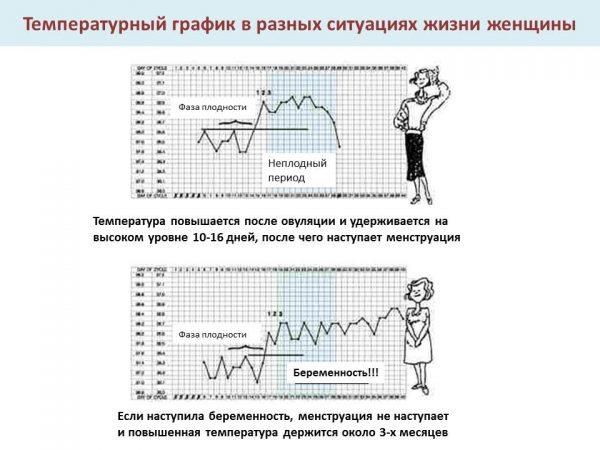Графики базальной температуры небеременной и беременной женщин