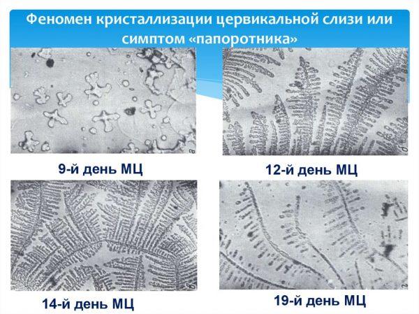 Кристаллы хлорида натрия под микроскопом в разные дни цикла