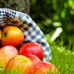 Яблоки в корзинке на траве