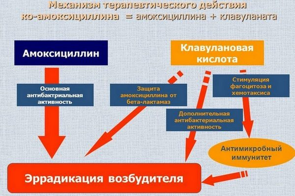 Механизм действия соединения амоксициллина и клавуланата