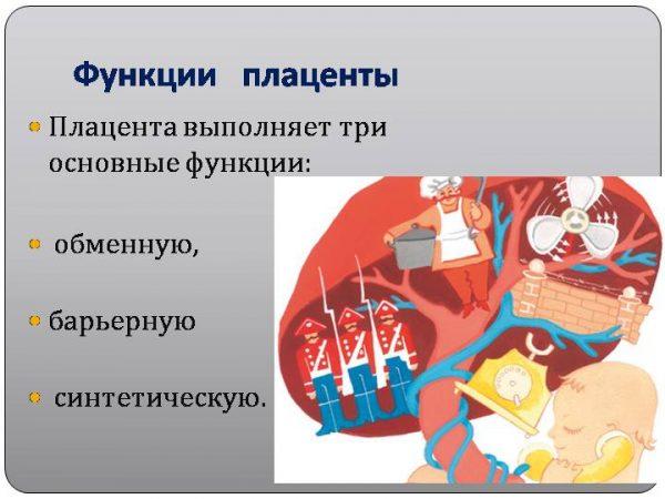 Рисованное изображение функций плаценты