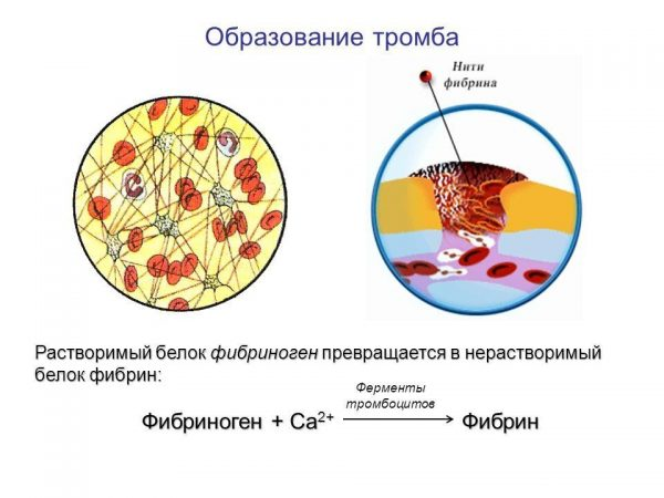 Реакция превращения фибриногена в фибрин