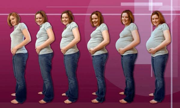 Беременный живот по неделям