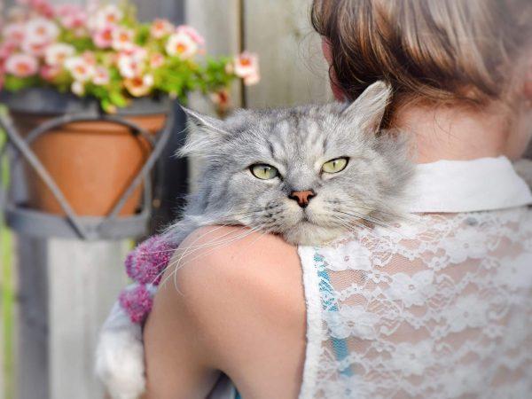 Кошка положила морду на плечо девушки