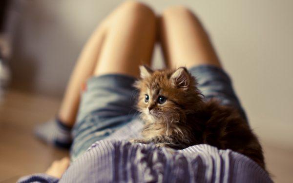 Котёнок лежит у девушки на животе