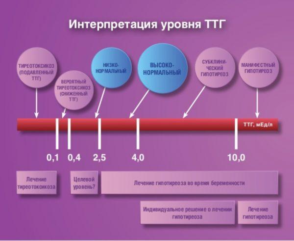 уровень ТТГ у беременной на графике