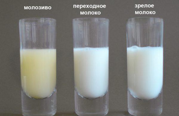 Внешний вид молозива, переходного и зрелого молока