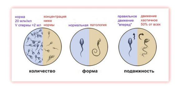 Качество спермы