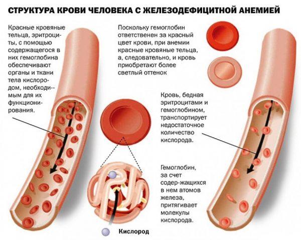 Показания гематокрита во время беременности