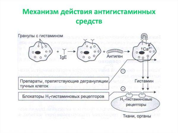 Механизм действия антигистаминных средств